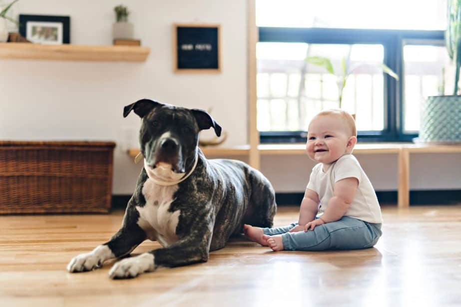 Are Pit Bulls Good With Kids The Truth