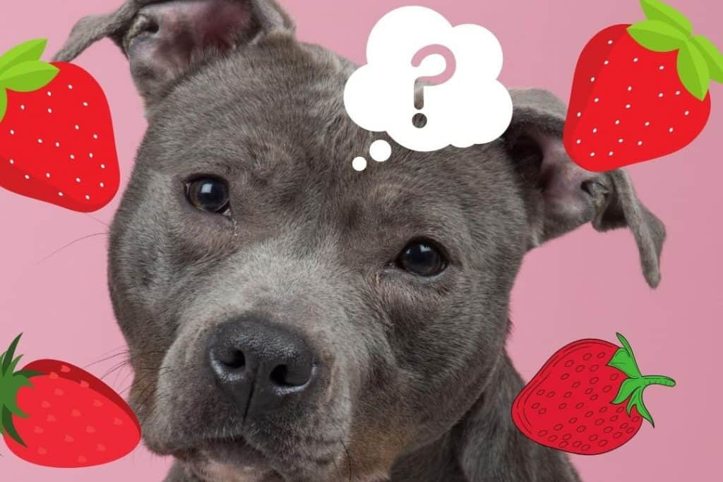 can pitbulls eat strawberries featured image