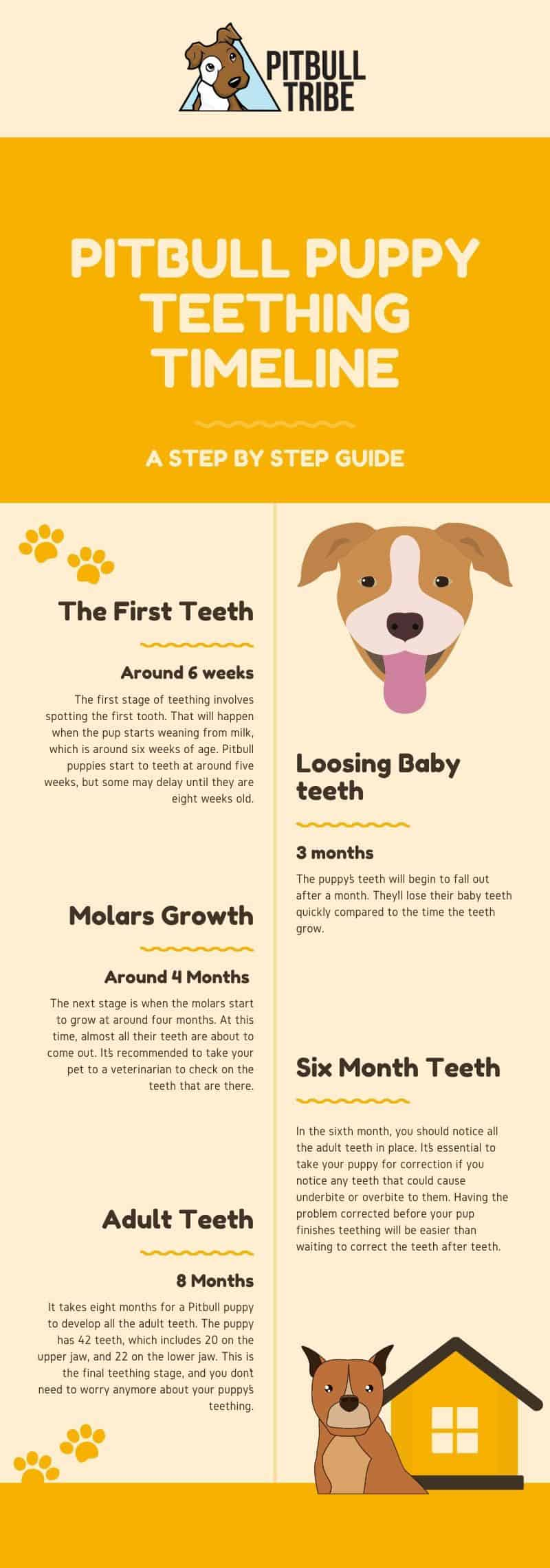 pitbull puppy teething timeline infographic