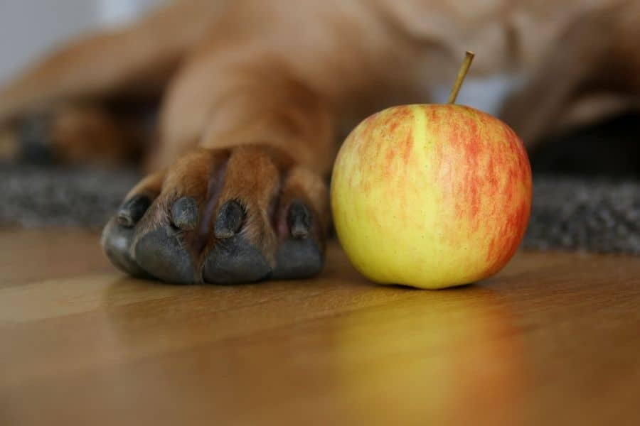 apple next to a dog paw